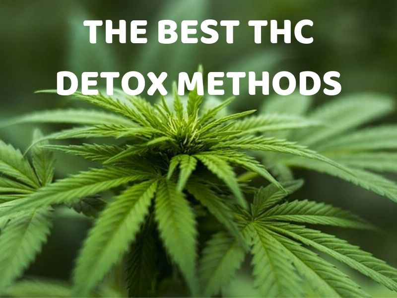 THE BEST THC DETOX METHODS