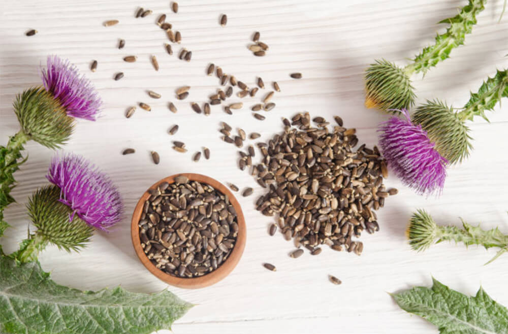 Does Milk Thistle Work for a Drug Test?